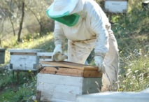 Une délégation marocaine se rendra en avril prochain à Alger : Les apiculteurs maghrébins s'organisent pour défendre leurs intérêts à l'international