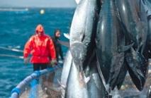 Pêche : L'ICCAT promet une année intense pour les thonidés de l'Atlantique