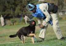 Vie de chien à Kaboul: la truffe ou la vie