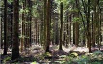 70% des forêts mondiales sont menacées par la sécheresse
