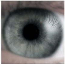 Et si les aveugles pouvaient voir en braille ?