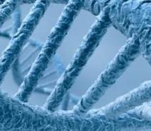 Un gène de l'éternelle jeunesse découvert chez un invertébré aquatique