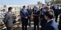 Inauguration à Sidi Bennour d'un marché moderne à bestiaux