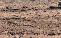 insolite : Des légumes chinois sur Mars?