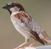 Des oiseaux se servent de mégots pour construire leur nid