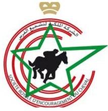 L'étonnante décision de la Société Royale d'encouragement du cheval : Des chevaux de race condamnés à l'abattoir