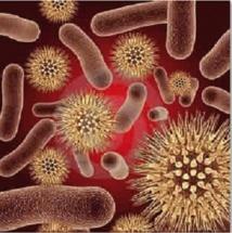 Plusieurs décès enregistrés en un mois : L'endémie de méningite interpelle les autorités
