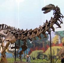 Les paléontologues rappellent que les brontosaures n'existent pas