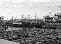 Le port de pêche  de Laâyoune paralysé