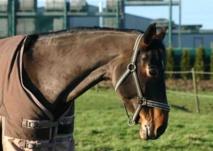Rétablir les propriétaires de chevaux de race dans leur droit