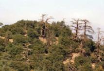 Le patrimoine forestier victime de la langue de bois