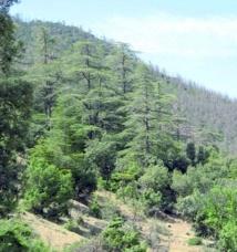 Lancement d'une carte interactive pour la protection des ressources forestières