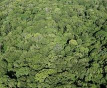 Des portables pour les arbres d'Amazonie