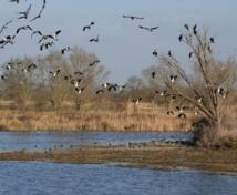 «Les zones humides protègent notre eau»