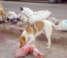 Tan Tan, paradis des chiens errants