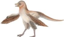 La découverte d'un nouveau dinosaure remet en question ce que l'on pensait des oiseaux