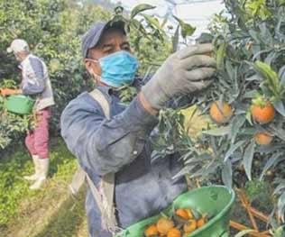 300 saisonniers marocains bientôt acheminés vers la France