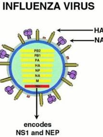 Plusieurs cas de grippe AH1N1 à Dakhla