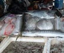 Hausse des prix des poissons, fruits de mer et viandes
