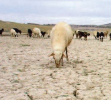 Les campagnes marocaines victimes de la sécheresse