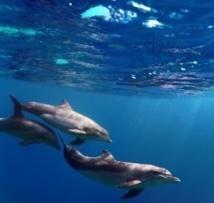Les dauphins s'appellent-ils par leurs prénoms ?
