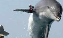 Les dauphins militaires n'ont pas réellement déserté en Ukraine
