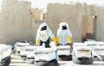13,64 millions de DH pour le développement de l'apiculture dans la région de Doukkala