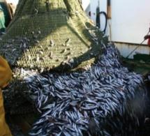 Hausse de 35% de la production nationale de la pêche côtière et artisanale