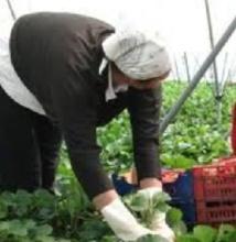 Plus de 12.000 Marocains travaillent de façon autonome en Espagne