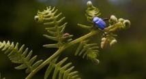 Il y a urgence à préserver la flore et la faune