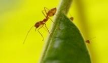 Et si les fourmis nous aidaient à prédire les séismes ?