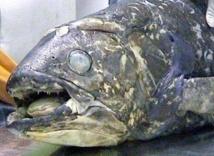 Les aventuriers du coelacanthe perdu