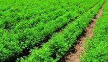 L'approche de la fin de l'exonération fiscale du secteur agricole met le feu aux poudres