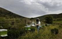 «Happy» apiculteurs grecs, mais pour combien de temps?