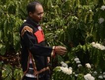 Les planteurs de café vietnamiens hi-tech à l'assaut du marché mondial