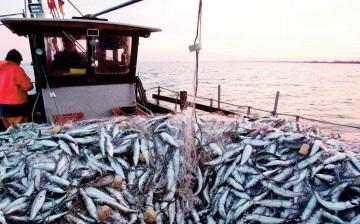 Débat sur la pêche maritime et les opportunités d'investissement dans la région de Guelmim-Oued Noun
