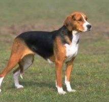 Insolite : Avoir un chien réduirait les risques de maladies cardiaques