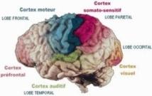 Identification des zones cérébrales activées par les chatouilles