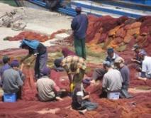 Les pêcheurs réclament une révision de la fiscalité applicable à leur secteur