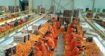 Importante augmentation des exportations d'agrumes vers la Russie