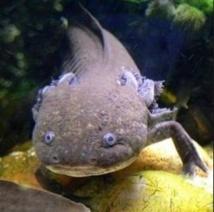 Comment la structure des poissons a donné naissance aux hanches des quadrupèdes