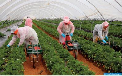 Les autorités consulaires de Séville se rendent auprès des saisonnières marocaines