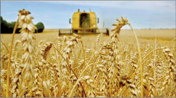 Dame nature creuse les sillons d' une bonne année agricole