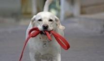 Insolite : Des biscuits pour chiens