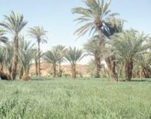 Lutte contre la désertification à Laâyoune et Smara