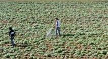 Le Qatar propose un accord «argent contre nourriture» au Maroc