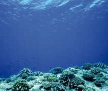 Les fonds marins, un trésor qui regorge de vie microscopique