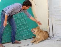 Le lionceau à 20.000 dollars qui vivait sur un toit de Kaboul