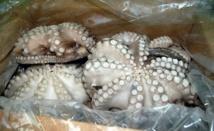 Saisie et incinération de deux tonnes de poulpe