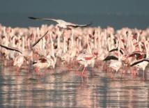 Sebkha de Zima, un site Ramsar en péril